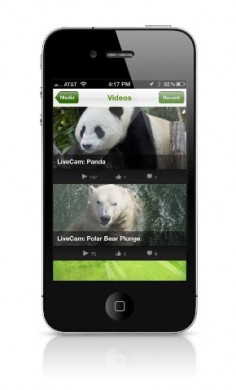 San Diego Zoo Animals Go Mobile With Panda Cam, Polar Cam